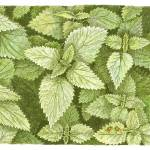 """Nettles"" by JohnFarman"