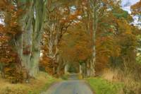 Autumn Road 2000