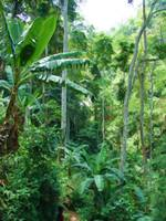 Togo Jungle Path