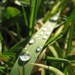 """""""Wassertropfen auf Grashalm / waterdrops on a blade"""" by MatthiasSutter"""