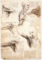 Anatomical_studies_of_the_shoulder