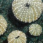 """""""Sea shells1"""" by FizzyArtist"""
