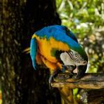 """Nassau Zoo Bird"" by Actionp4ck"