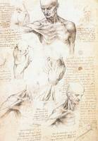 Anatomical Studies