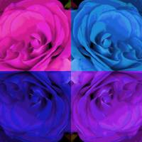 Majid 4x4 Rose pink purple blue center rotated