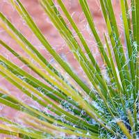 Yucca Abstract 3