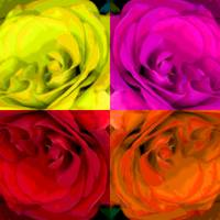 Majid 4x4 Roses Red yellow orange pink rotated
