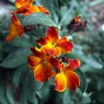 """Bouquet"" by Adi_Bud_photoDesigner"