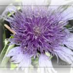 """""""2nd Purple Flower"""" by TallyAnn"""
