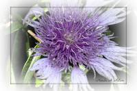 2nd Purple Flower