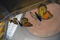 Butterflies In the Rotunda