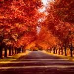 """""""Autumns Warmth"""" by digitumdei"""