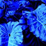 """""""Romney Blue"""" by imacd"""