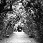 """""""boboli trees"""" by emilymcalpine"""