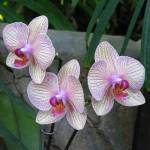 """Orchid Trio"" by naturephotos"