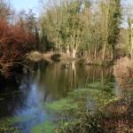 """Lower Crisbrook Pond"" by davidswebs"