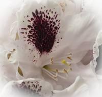 flowers1 gallery
