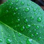 """""""Rain Drops"""" by Paul830212"""