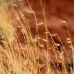 """Soft Focus Grass"" by SherylKaras"