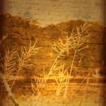"""faint memories"" by slider72"