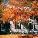 """CT Fall Foliage @ Home"" by naggeneen"