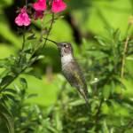 """RJL_Butterfly_Park28"" by Bobsphotosonline"