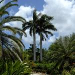 """Cayman Islands : Botanic Park"" by RonScott"