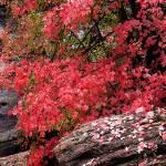"""""""Autumn In Zion"""" by pbk"""