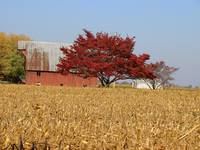Red Tree Red Barn