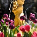 """Tulip Fountain"" by pdg"