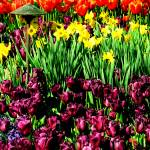"""""""Dallas Blooms (Welcome Spring Card)"""" by rayjacque"""