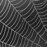 """""""cobweb 2"""" by rob"""