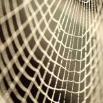 """cobweb 1"" by rob"