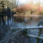 """Winter frost"" by davidswebs"