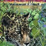 """Endangered Species"" by casamero"