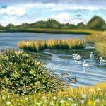 """SWANS, DUCKS & EGERT AT GATEWAY NAT"