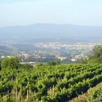 Vineyard in Chianti Hills Art Prints & Posters by Joel Mack