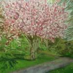 """Cherryblossom1"" by Cherokeyjill"