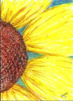 Sunflower in color
