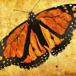 """butterfly"" by derekbrumby"