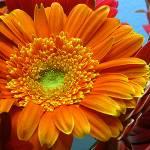 """""""Orange Floral"""" by claytonbruster"""