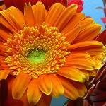 """Orange Floral"" by claytonbruster"