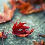 """""""autumn"""" by moniqe"""