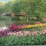 """""""Tulips"""" by bobfaz"""