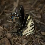 """""""Etowa River Butterflies"""" by WootenCreative"""