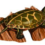 """Southern Painted Turtle"" by inkart"