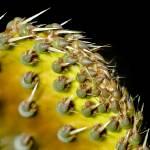 """""""Colorful Cactus"""" by xactshot"""