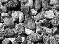 Shoreline Rocks by David Kocherhans