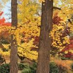 """Autumn Color, Lithia Park, Ashland, Oregon"" by RichardSisk"