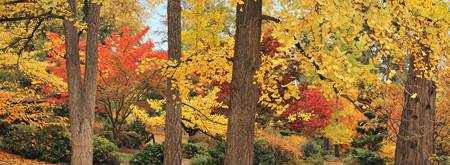 Autumn Color, Lithia Park, Ashland, Oregon